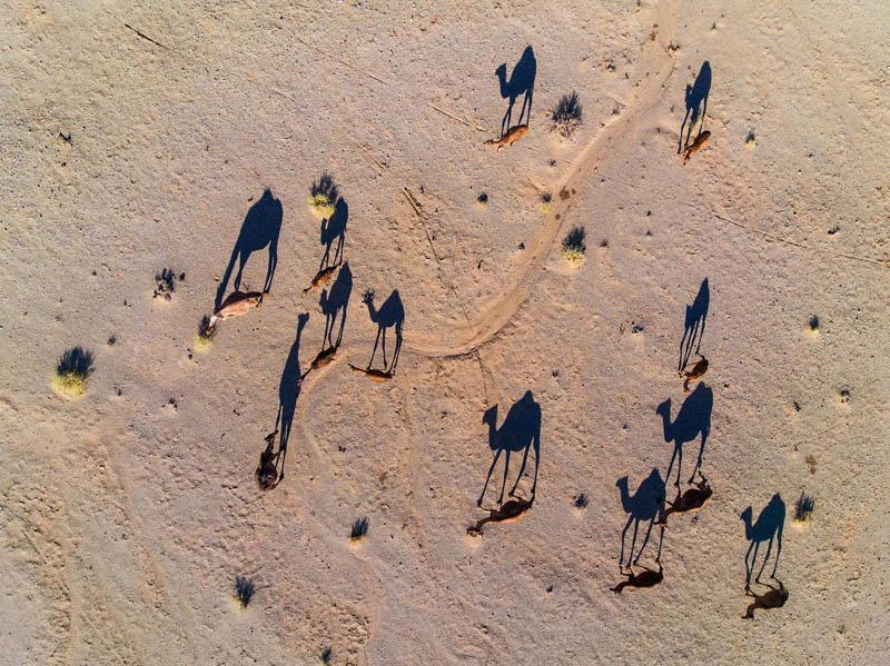 شترها در جستجوی آب | طرود | ایران | عکس از عباس رستگار