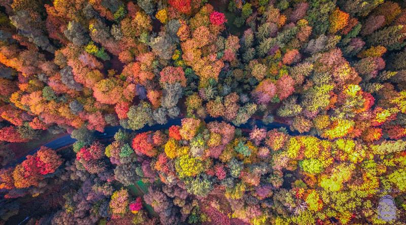 شاخ و برگ های پاییزی | لیتوانی | عکس از Vaidas Geguzis