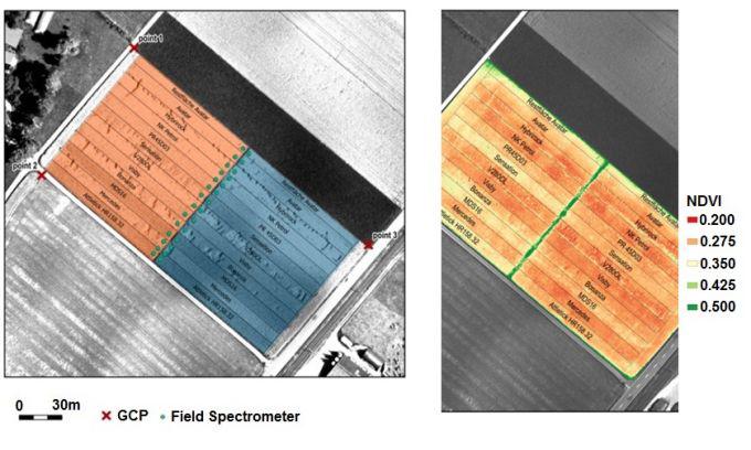 مزرعه آزمایشی دانه های روغنی (چپ) سم پاشی شده (نارنجی) و بدون هرگونه اقدام درمانی (آبی) و نقشه NDVI استخراج شده از داده های multiSPEC 4C