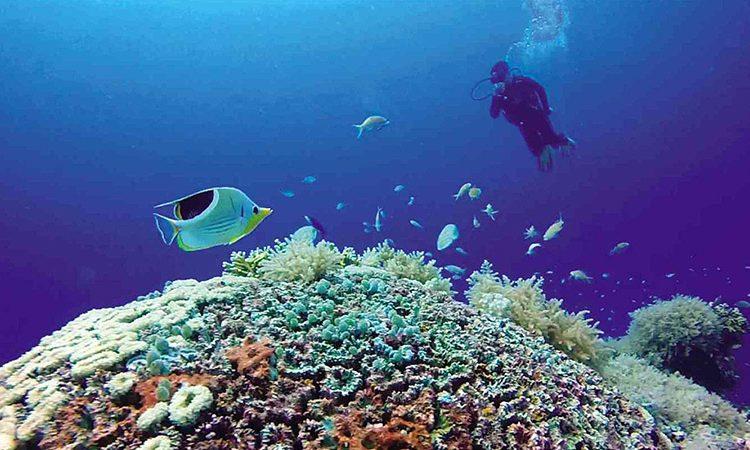 منابع مرجانی خلیج فارس نقشهبرداری شد.